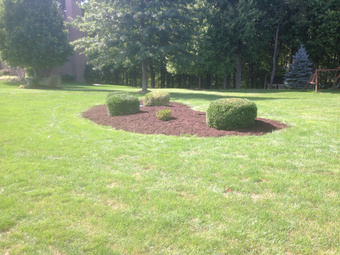 Order Lawn Care in Elizabeth , PA, 15037