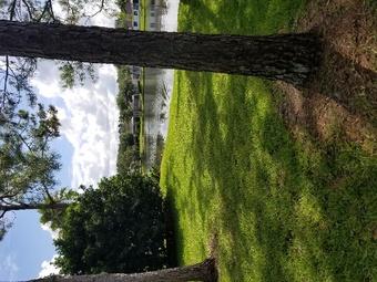 Order Lawn Care in Tampa, FL, 33615