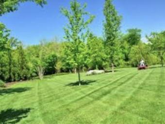 Order Lawn Care in Oak Lawn, IL, 60453