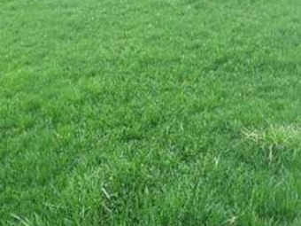 Order Lawn Care in Charlotte, NC, 28214