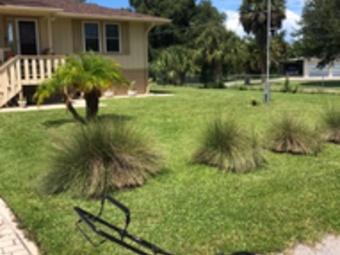 Order Lawn Care in Wimauma, FL, 33598