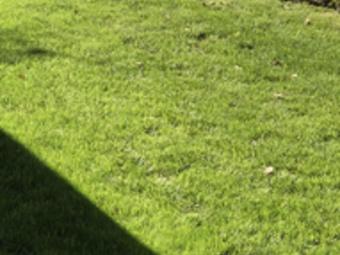 Order Lawn Care in Morton Grove, IL, 60053-2382