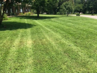 Order Lawn Care in Knoxville, TN, 37921