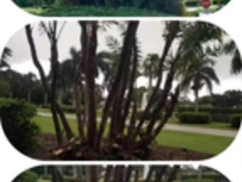 Order Lawn Care in Boynton Beach, FL, 33473