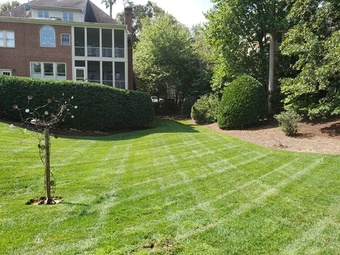Order Lawn Care in Cary, NC, 27519