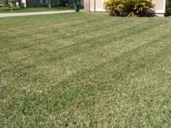 Order Lawn Care in Jacksonville, FL, 32244