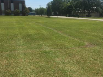 Order Lawn Care in Goose Creek, SC, 29445