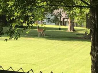 Order Lawn Care in Bradyville, TN, 37026