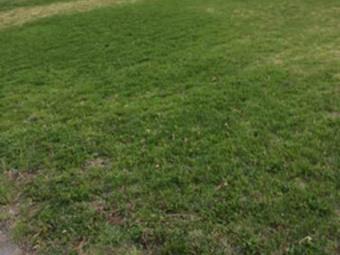 Order Lawn Care in Olathe, KS, 66061