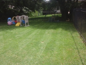 Order Lawn Care in Baltimore, MD, 21208