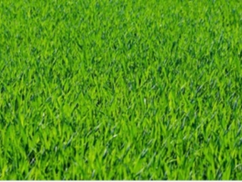 Order Lawn Care in Waveland, MS, 39576
