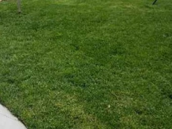 Order Lawn Care in Kansas City, MO, 64138