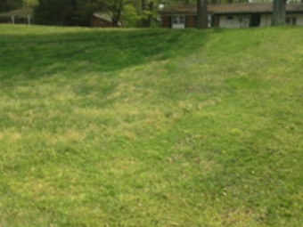 Order Lawn Care in Jackson, TN, 38305