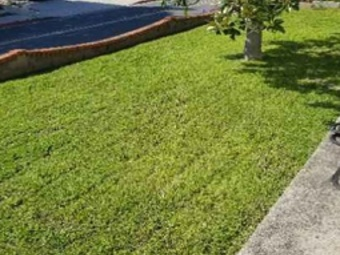 Order Lawn Care in San Diego, CA, 92154