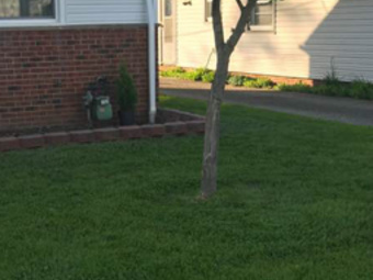 Order Lawn Care in Lyndhurst, OH, 44124