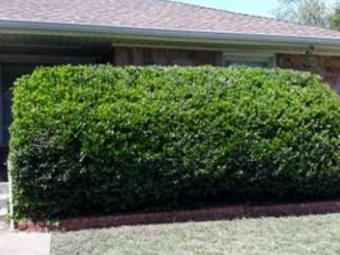 Order Lawn Care in Oklahoma City, OK, 73162