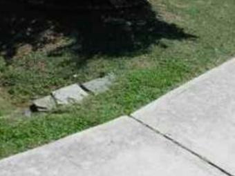 Order Lawn Care in Creedmoor, NC, 27522