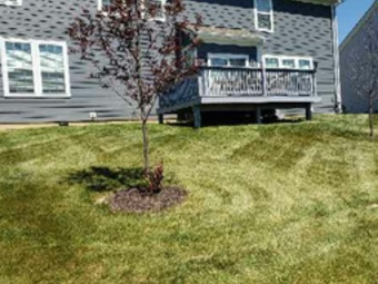 Order Lawn Care in Indianapolis, IN, 46220