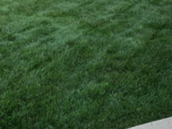 Order Lawn Care in Hartford, WI, 53027