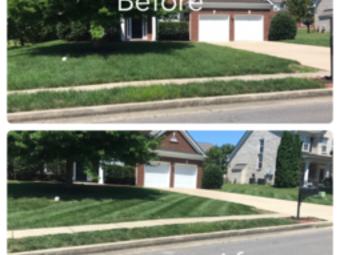 Order Lawn Care in Rockvale, TN, 37153