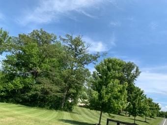 Order Lawn Care in Fredericksburg, VA, 22408