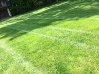 Order Lawn Care in Warren, MI, 48091