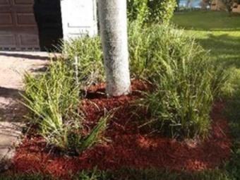 Order Lawn Care in Cutler Bay, FL, 33189