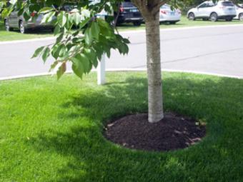 Order Lawn Care in Miami, FL, 33186