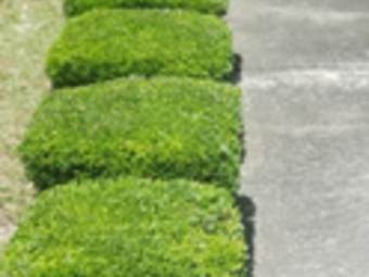 Order Lawn Care in Summerville, SC, 29485