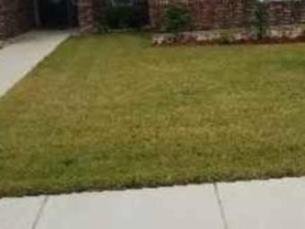 Order Lawn Care in Dallas, TX, 75232