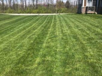 Order Lawn Care in Westfield, IN, 46074