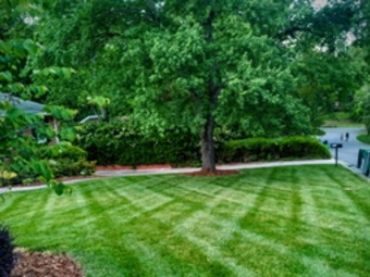 Order Lawn Care in Monroe, NC, 28110