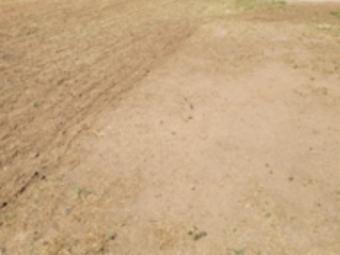 Order Lawn Care in Phoenix, AZ, 85033