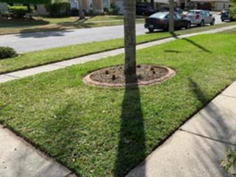 Order Lawn Care in Apollo Beach, FL, 33572