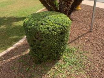 Order Lawn Care in Maricopa, AZ, 85139