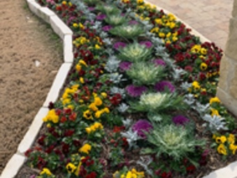 Order Lawn Care in Garland, TX, 75044