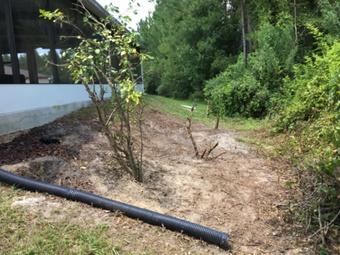 Order Lawn Care in Wesley Chapel, FL, 33544