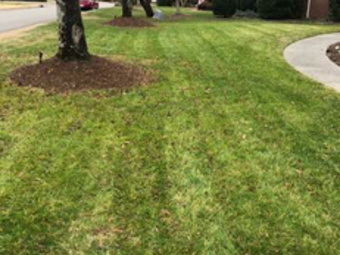 Order Lawn Care in Nashville, TN, 37204