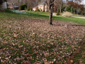 Order Lawn Care in Youngstown, OH, 44504