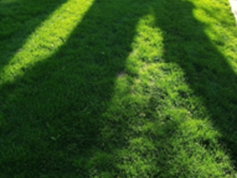 Order Lawn Care in Council Bluffs, IA, 51501