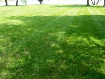 Order Lawn Care in Tarpon Springs, FL, 34689