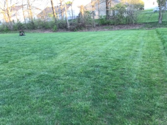Order Lawn Care in Indianapolis, IN, 46217