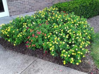 Order Lawn Care in Bowling Green, KY, 42103