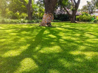 Order Lawn Care in Valley Park, MO, 63088