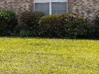 Order Lawn Care in Bartlett, TN, 38134
