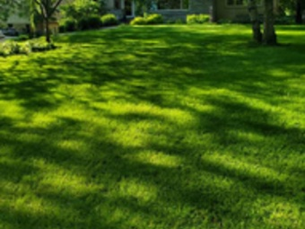 Order Lawn Care in Brooklyn Park, MN, 55444