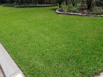 Order Lawn Care in The Woodlands, TX, 77381