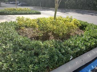 Order Lawn Care in Miami Gardens, FL, 33169