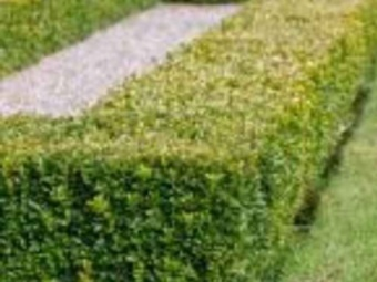 Order Lawn Care in Kernersville, NC, 27284