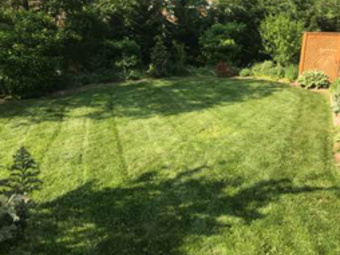 Order Lawn Care in Silver Spring, MD, 20902